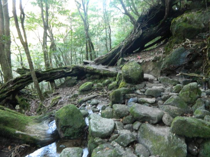 Buscando a los Espíritus del Bosque